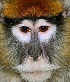 Monkey See Photograph by Steve Ratliff - Monkey See Fine Art Prints ...