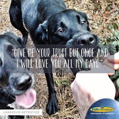 Labrador Retriever Motto: Give me your trust but once and I will love you all my days. www.superstarpetservices.com