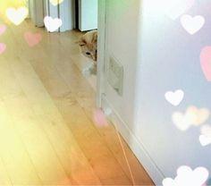 ツアー☆宮本佳林の画像 | Juice=Juiceオフィシャルブログ Powered by Ame…
