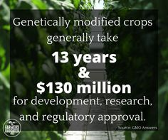 Genetically modified crops generally take 13 years and $130 million for development, research, and regulatory approval.