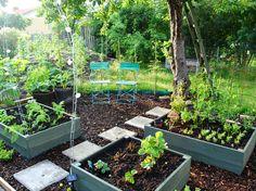 Köksträdgården är på gång. Egentillverkade odlingslådor täckmålade i grönt.