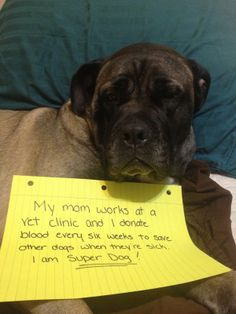 Reverse Dog Shaming Contest: Zoe