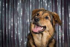 Hundfotografering - föreviga ditt husdjur
