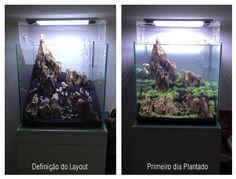 Dimensions : 37 X 37 X 37 (cube) Volume : 50 litres/37 litres Brutes réelles Substrat de reproduction: 2, 5 kg