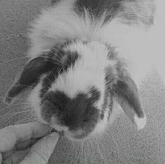 #binkybars #rabbit #treat #UK