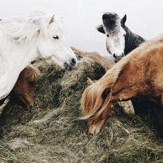 ♀♅☽ horse #animal