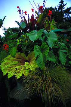 Gunnera leaf sculpture mixed with containers - awesome.  Little & Lewis