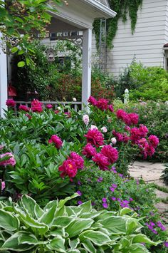 Peonies, cranesbill geranium, hosta