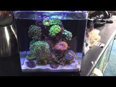The best nano reef aquarium ever! - YouTube