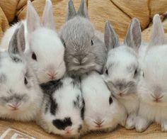 animals, black, bunnies, cute, food, kawaii, rabbits, wallpaper, white - image
