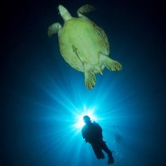 @rahadian_hasnadi #silhouette #turtle #underwater #wideangle #sunburst #scubadiving #scuba_diving #scuba_labs #padi #dive #dive_indonesia #marinebiologyshots #picoftheday #photooftheday #bestoftheday #bestshot #statigram #webstagram #igersdivers #igers #ig_nesia