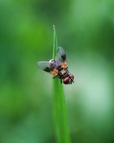 #fly #macro #naturelovers #nature #beauty #insect #manualfocus #helios44m4 #canon #interesting #details #summer #awesome #amazing #picoftheday #bestoftheday #макро #природа #красота #муха #насекомые #боке #bokeh #лето #nofilter #ukraine #kharkiv #bug #atmosphere