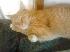 Yep, Dozer dozing!
