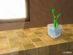 Imagen titulada Grow Lucky Bamboo Step 5