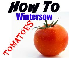How to Winter Sow Tomato Seeds