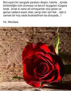 Islam, Words, Rose, Flowers, Plants, Instagram, Karma, Pink, Plant