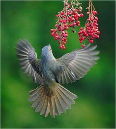 Beautiful Bird Photography