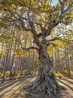 Wishing Tree by Bulgaria. @go4fotos
