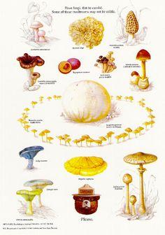 The educational nature poster series from Smokey Bear.: Smokey Bear's Fungi Poster