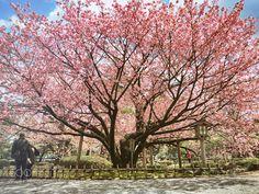 Fine day in kanazawa by cris_kanai