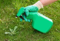 Homemade Weed Killer Recipes: Get Rid of Weeds Without Chemicals How To Relax Your Mind, How To Relax Yourself, Home Remedies For Gas, Gas Remedies, What Are Weeds, Weed Killer Homemade, Organic Weed Control, Used Tea Bags, Plant Growth