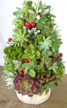 DIY Succulent Topiary Tree tabletop garden by RootedInSucculents