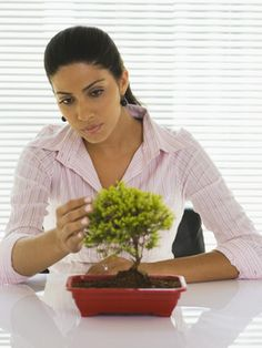 How to Make an Instant Bonsai Tree. Bonsai is the ancient Japanese garden art of training miniature trees. Here's a quick and easy way to create miniatures that have some of the character of true bonsai without the painstaking demands. Bonsai Tree Care, Bonsai Tree Types, Indoor Bonsai Tree, Bonsai Plants, Bonsai Garden, Mini Bonsai, Cacti Garden, Air Plants, Indoor Plants