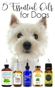 5 Essential Oils for Dogs | http://www.thelazypitbull.com/2015/09/5-essential-oils-for-dogs/
