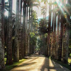 """""""No encanto Jardim Botânico Pra meu descanso..."""" #claranunes #riodejaneiro  .  Sem dúvida um dos melhores lugares pra se fazer uma caminhada despretensiosa. O Jardim Botânico possui inúmeras espécies de árvores e flores (tem até a arvore do Viajante) além do Teatro Tom Jobin e apresentações de música ao vivo sabia? . Recomendo: @oquefazernoriodejaneiro .ㅤㅤ Acesse o blog (http://ift.tt/1Mv9A8t) e veja mais de 40 dicas do que fazer no Rio! . . . . . #aosviajantes #jardimbotanico #riodejaneiro…"""