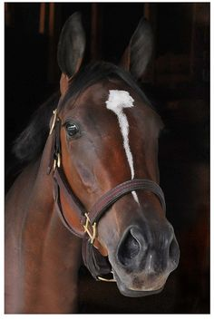 Proud Spell, 2008 champion filly, winner of the Kentucky Oaks and Alabama Stakes, and winner of over $ 2 million.