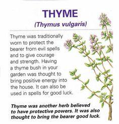 Magical herb Thyme / Book of Shadows. Incluye muchas mas hierbas.