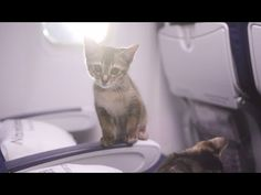 Video: Katzen würden Condor fliegen | traveLink.