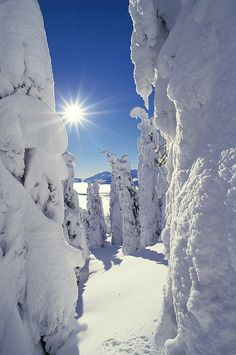 Snowscape: Snow-Covered Trees And Bright Sun. Winter wonderland