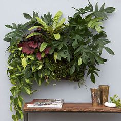 How to design with houseplants: Plant in a pocket.