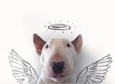 Quand un photographe s'amuse avec son chien sur Instagram. Rafael Mantesso