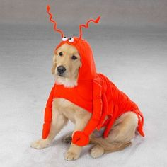 The most cuddly crustacean that you will find! Made of durable, high-quality fabric, with closures. Fun details like dangling legs an lobster eyes, antennae and tail. Why We Love It: Lobsters don't ge