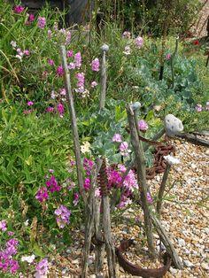 Derek Jarman's garden, Dungeness | by chinratee Gravel Garden, Garden Plants, Good House, Simple House, Garden Inspiration, Garden Ideas, Planting, Gardening, Seaside Garden