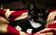 Looks a bit like our cat, Frazier, when he was a little guy.
