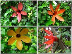 dekoretti´s Welt: Neuzüchtung - Die pflegeleichteste Blume der Welt ...