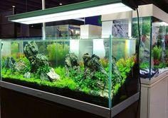 Beautiful planted aquarium by Xue Hai at LiuBo booth in CIPS Exhibition, Guangzhou - China.  #FAAO #Aquascaping #Planted #Aquarium #Aquatic #Plant #Freshwater #aquascape #plantedtank #plantedaquarium #CIPS #China #AquascapingMakesMyWorldGoRound
