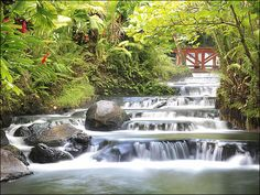 Tabacon Hot Springs, Costa Rica  Been there...want to go back!
