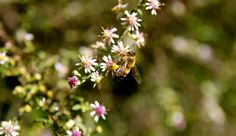Get your beekeeping year off to a good start with these apiary chores.