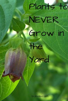 Avoid planting these plants in the backyard