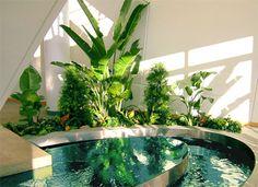 Dream Bathtub Lt 3 Indoor Pond Plants Garden Interior Office