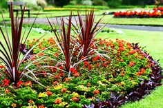 Big cordyline's are great for the yard. Just a little TLC and they can spice up your flowerbed.