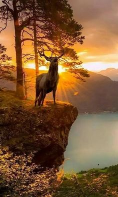 Amazing Landscapes ,Nature,Animals and Places added a new photo. List Of Animals, Animals Of The World, Animals And Pets, Funny Animals, Deer Pictures, Nature Pictures, Beautiful Pictures, Amazing Photos, Beautiful Creatures