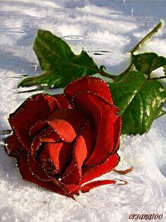 Rose AnimaciónY me da miedo,  me da temor decir adios yo no lo niego  pero tambien quedarme creeme que no puedo  que mas quisiera  que mas quisiera  tener conmigo lo que mas feliz te hiciera