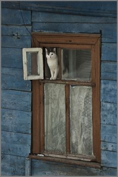 love the rustic house and window with the cat