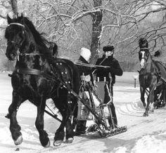 Belslydjeien met een arreslee in de bossen van Lauswolt in Beetsterzwaag. De voorste rijder is de heer F. de Jong uit Tjerkgaast met de Friese dekhengst Franke. Foto 1979. Tags: arreslee, belslide, horse sleigh
