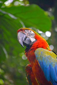 Macaw by Switzer-Land Studios